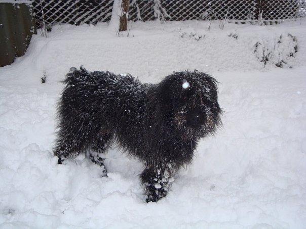 Зима!!!!Снежная  сказка! - Страница 2 X_f9d7b59f