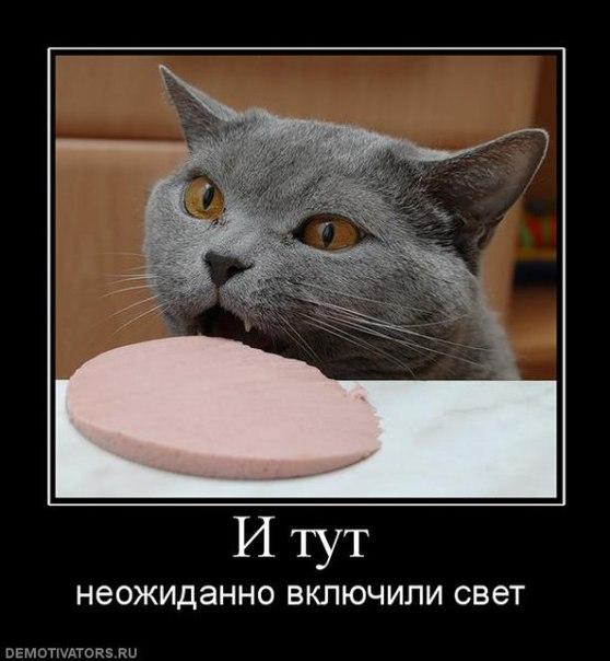 ржачные картинки с животными: