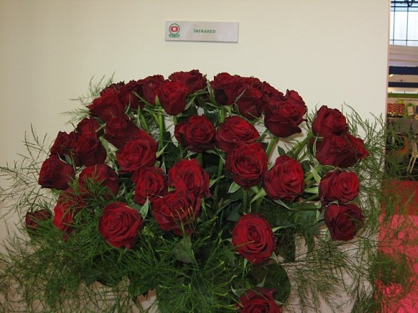 Цветы оптом дешево в казани