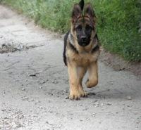 Купить щенка в днепропетровске