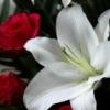 Цветы 39 в Калининграде, доставка