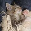 пос. Солнечное, 18 брошенных кошек, помогите!!!