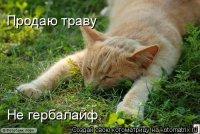 Александр Мальбин, 25 марта , Самара, id47264820