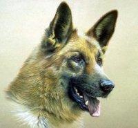 Фото - Привет.ру - Собака-Овчарка - Рисованные животные - фотографии пользователя Ingusia.