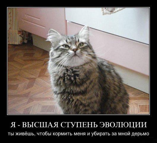 http://cs568.vkontakte.ru/u95397725/117054730/x_f2adb00d.jpg
