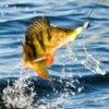 Русской Рыбалки 3.6 Онлайн и 3 Офлайн.Реальная рыбалка.