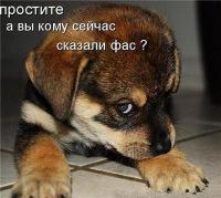 Эвелина Шкода, 13 июля 1999, Омск, id106067255