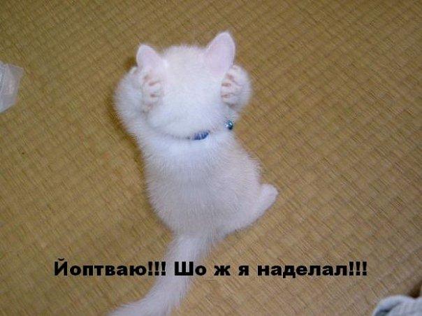 http://cs570.vkontakte.ru/u33414013/106734366/x_3637d732.jpg