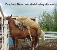 Секс конный