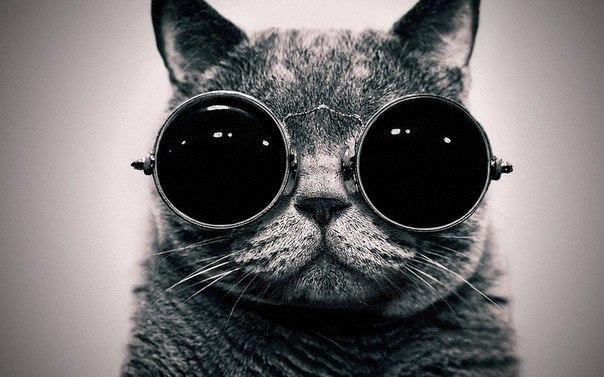 Игра] Чем предыдущий участник похож на котЭ? | Без кота жизнь не ...