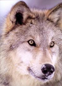 Wolf Hungry, 10 апреля , Москва, id154957174