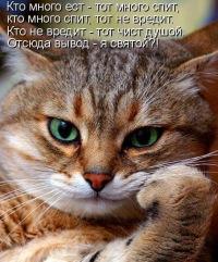 Почему мартовский кот