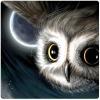 Эти удивительные совы | These Amazing Owls
