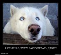 Катя Барабашка, 11 октября 1963, Ярославль, id168589580