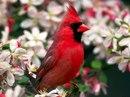 Птицы.  Широкоформатные 16:10.