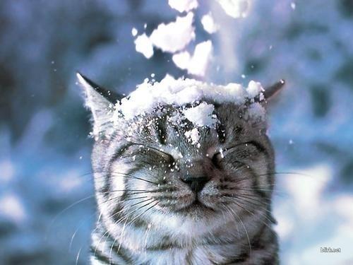 Хочу проснуться, раздвинуть шторы, а за окном уже всё засыпано снегом и наконец-то зима!