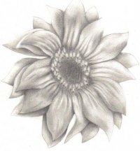 """""""Очень красивые рисунки простым карандашом (40 фото) ."""
