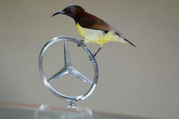Vito -> Mercedes -> �������� ��� ���������� -> ������� ...