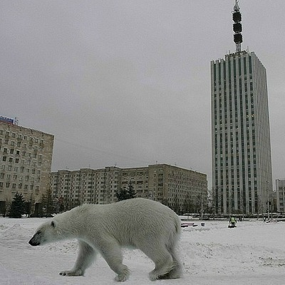 Марат Магомедов, 24 марта 1983, Архангельск, id39352063