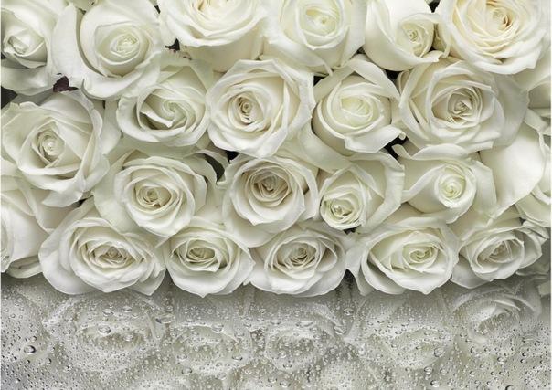 Фотообои розы (белые, красные, розовые.