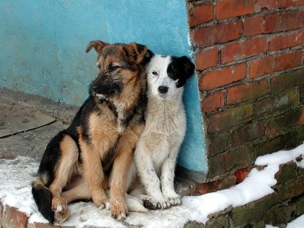 Бездомные животные в россии