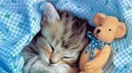Спокойной ночи вам!!!