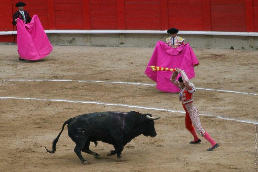 бандерильеро коррида corrida