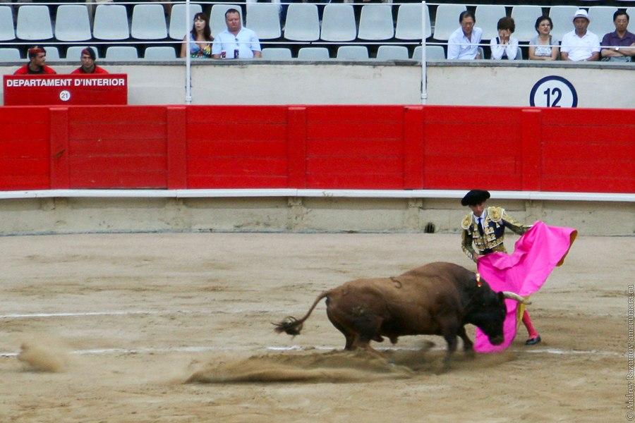 матадор коррида corrida
