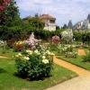 Садовые розы, продажа