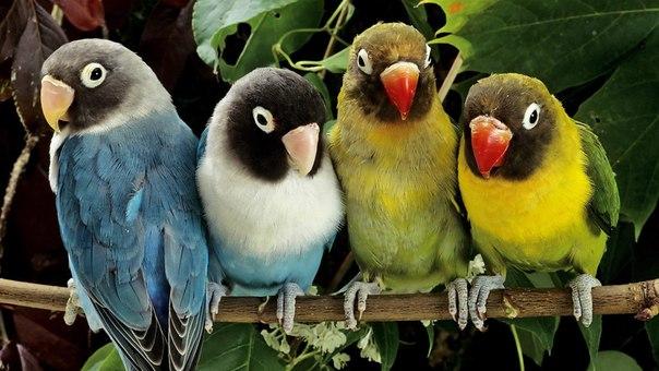 скачать торрент злые птицы зима.