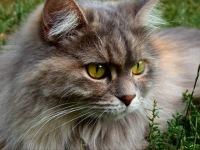Микоплазмоз у животных: диагностика, лечение, профилактика.