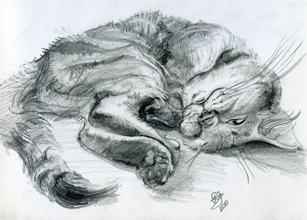 рисунки простым карандашом котов:
