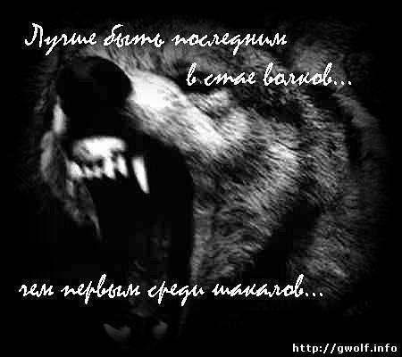 Стихи и песни про волков в картинках X_b0d51667