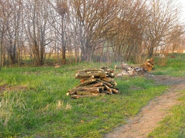 Огород в Родниковке. Результат труда.