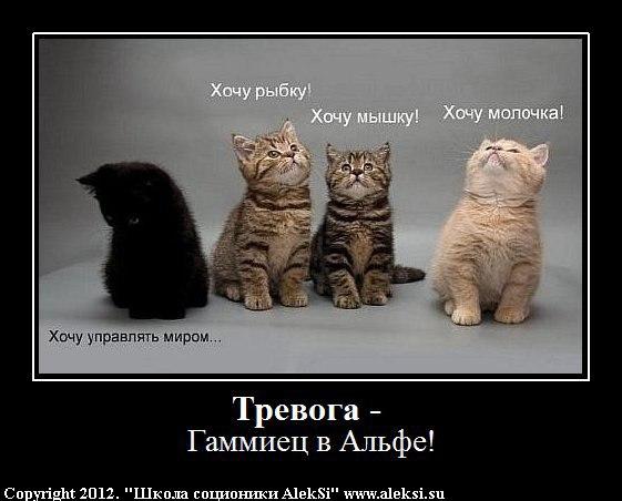 Соционика кот