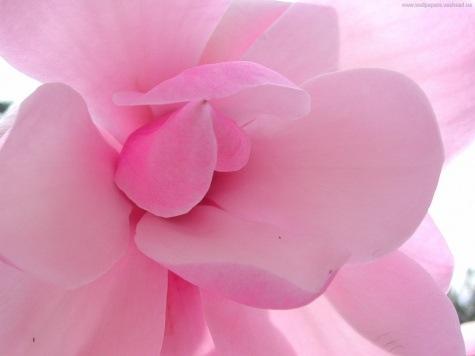 и это всё объесняет.  А вапще розовый цвет подчёркивает маю красату...