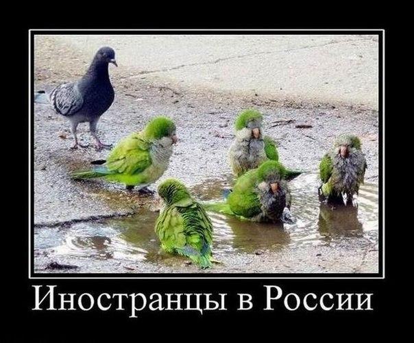Умом россию не понять приколы фото 2015 ...: dolbanutti.ru/index.php?page=7591