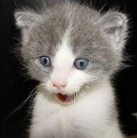 фото тварини смішні