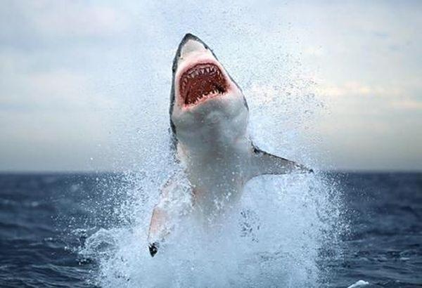 акула 2011