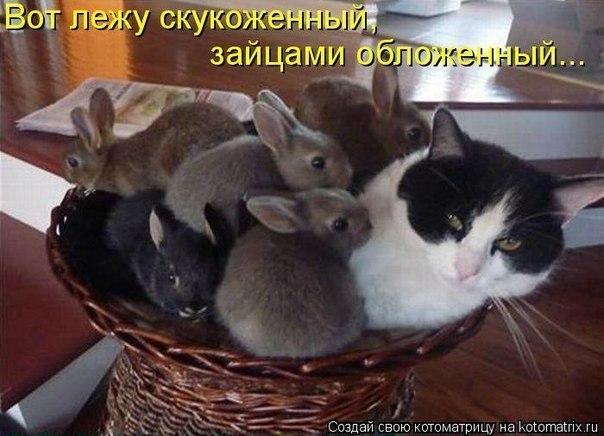 Обязанности кота в доме.