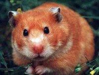 Positive=) Hamster=p, 5 мая , Львов, id93972263