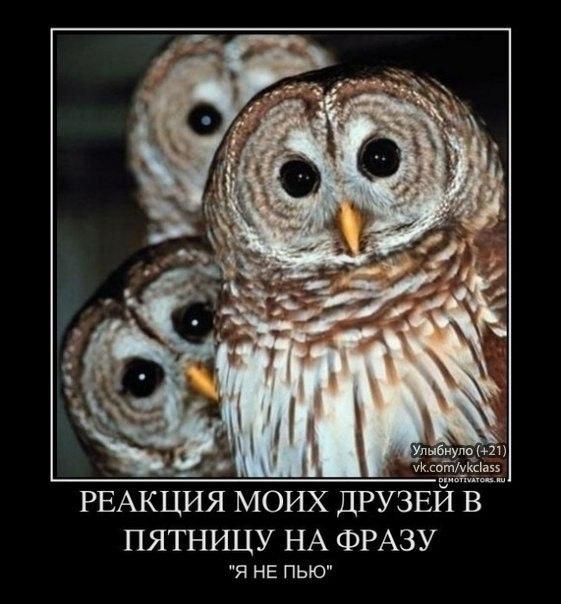 О девушках. XQkXEtV7st4