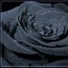 Black Rose 20 ноября 1987 Украина Одесса