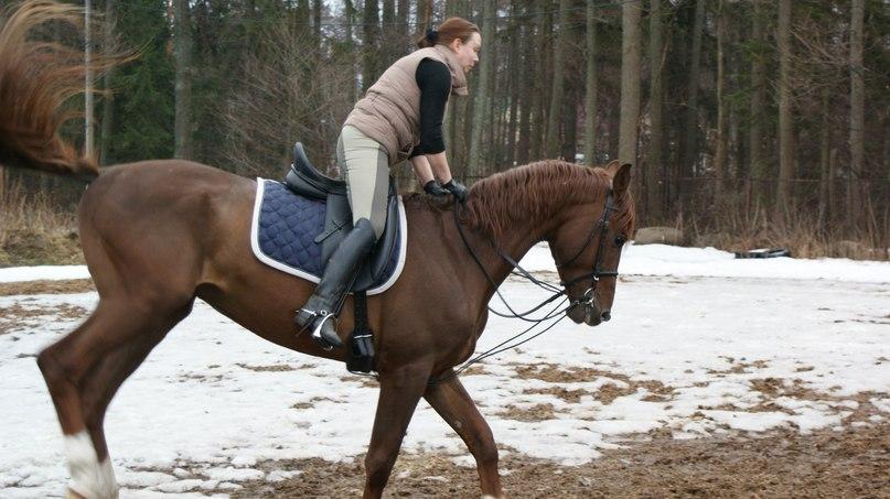 Как отучить лошадь