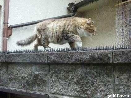 куда идет этот кот, делайте ставки!