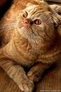 вязание крючком голубь схема. вязание крючком шапка-кошка со схемой.