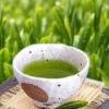 УЛУН: лучший чай тайских гор