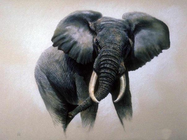 Серия Дикие животные, картина, живопись, анималисты, дикие животные, слон.