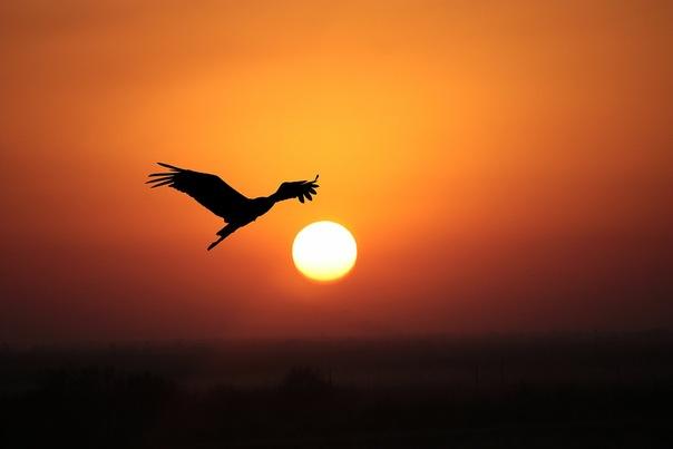 Аист на закате. Автор фото – Арег Манвелян.