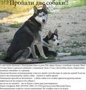 "город Домодедово - просмотр фото  ""Марфа и Джеса """